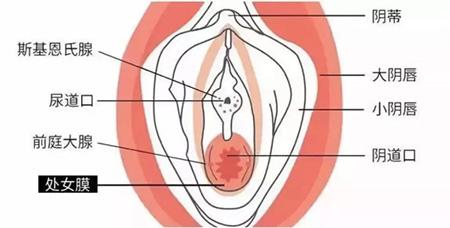 女生应该知道的五个关于处女膜的知识点